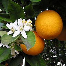 Narancslekvár készítése