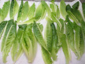 Római saláta szárítása